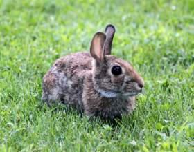 Как надеть шлейку на кролика фото