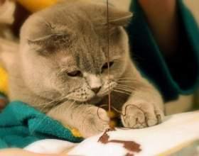 Как надеть шлейку на кота фото