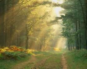 Как найти дорогу из леса фото