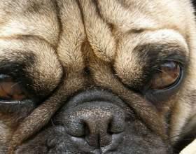 Как найти хозяина собаки фото