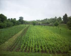 Как найти кадастровую стоимость земельного участка фото