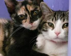 Как найти кота кошке фото