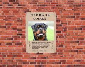 Как найти сбежавшую собаку фото