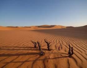 Как найти в пустыне воду фото