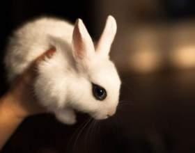 Как лечить понос у кроликов фото