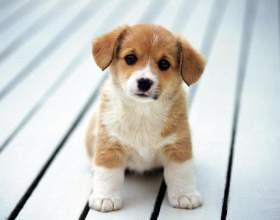 Как наказывать щенка фото