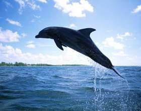 Как нарисовать дельфина фото
