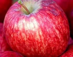 Как нарисовать яблоко акварелью фото