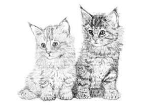 Как нарисовать котенка карандашом фото