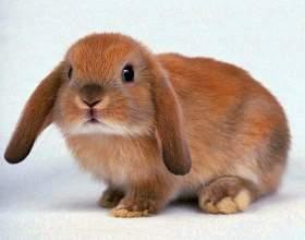 Как нарисовать кролика карандашом фото