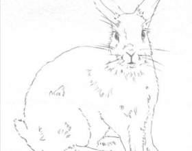 Как нарисовать кролика фото