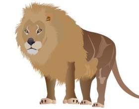 Как нарисовать льва фото