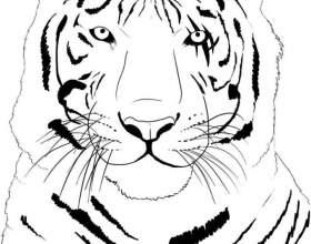 Как нарисовать тигра фото