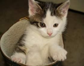Как научить ходить котов в туалет фото