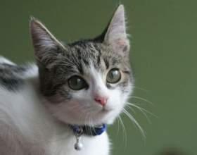 Как научить кошку ходить в лоток фото