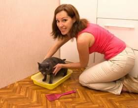 Как приучить взрослого кота к лотку фото