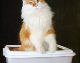 Как приучить уже взрослого кота к туалету фото