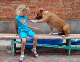 """Как научить собаку к команде """"дай лапу"""" фото"""