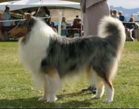 Как научить собаку ходить рядом фото