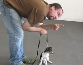 """Как научить собаку команде """"чужой"""" фото"""