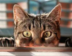 Как научить кошку командам фото