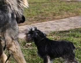 Как научить собаку не бояться собак фото