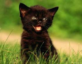 Как назвать черного котенка - мальчика фото