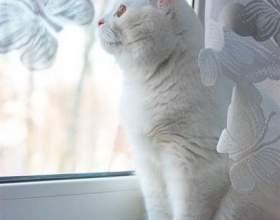 Как назвать белую кошку фото
