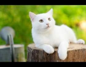 Как назвать белого кота фото