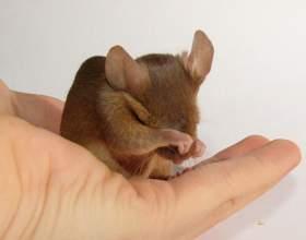 Как назвать мышку фото
