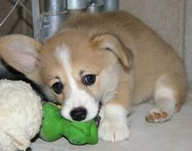 Как выбрать кличку для щенка фото