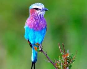 Как назвать птичку фото