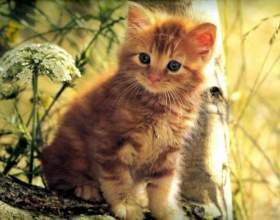 Как назвать рыжего котенка-мальчика фото
