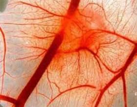 Как нормализовать кровообращение фото