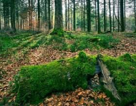 Как нужно вести себя в лесу фото