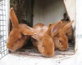 Как обработать клетки кроликов фото