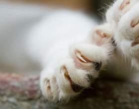 Как обрезать когти котятам фото