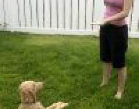 """Как обучить собаку команде """"лежать"""" фото"""
