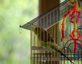 Как обустроить клетку для попугая фото