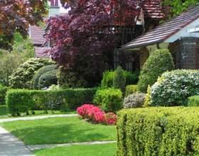 Как оформить садовый участок в собственность фото