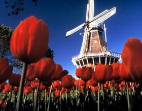 Как оформить визу в голландию фото