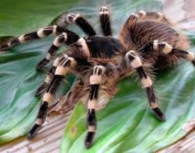 Как разводить пауков фото