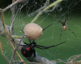 Как пауки плетут паутину фото