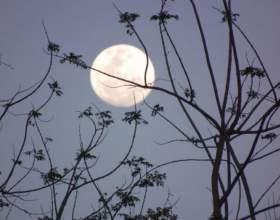 Как определить фазы луны фото