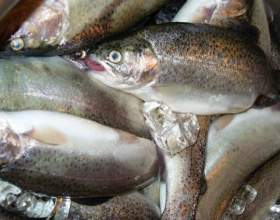 Как определить качество рыбы фото