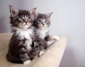 Как определить, кот или кошка фото