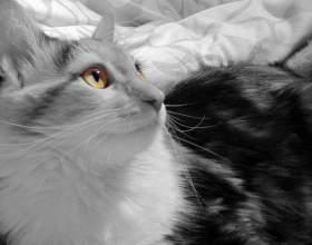 Как определить, котенок - девочка или мальчик фото