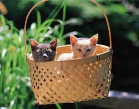 Как определить окрас котенка фото