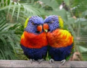 Как определить пол попугая фото