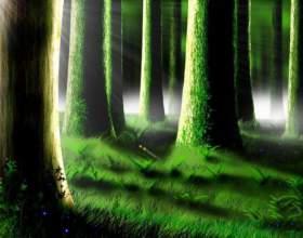 Как определить в лесу стороны света фото